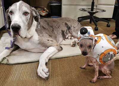 big dog and a little dog in a Star Wars Droid costume