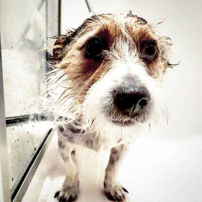 funny dogs look cold after baths