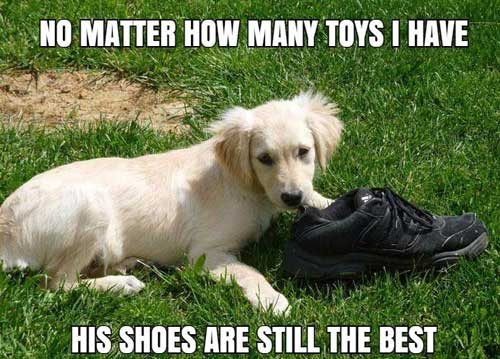 eating shoe more than toys