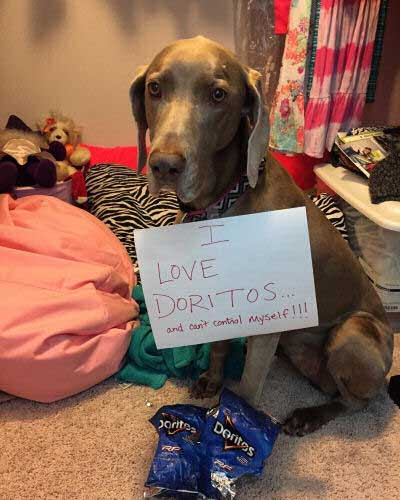 canine loves doritos