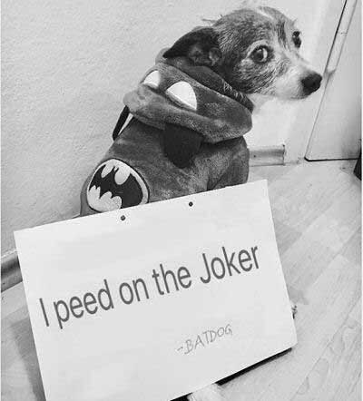 dogshaming with a dog bragging about peeing on the joker from Batman