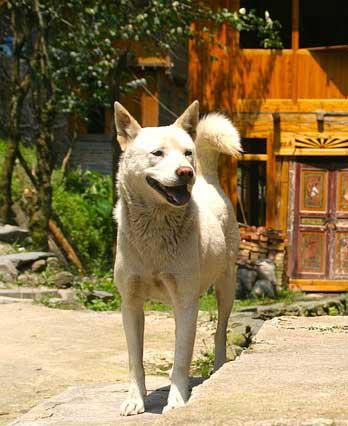 smiling dog outside