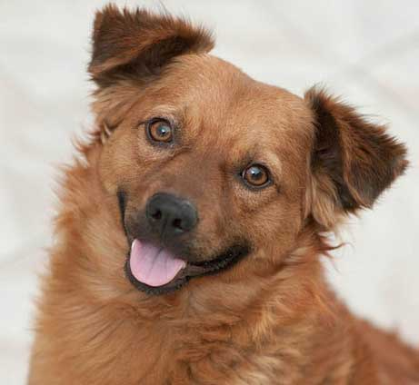 Pictures of Smiling Dogs of an awesome canine