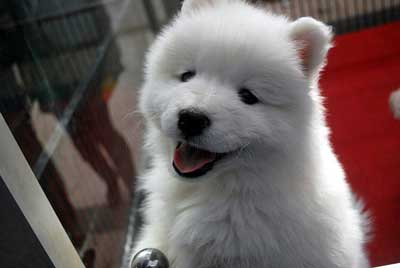 cute white puppy smiling
