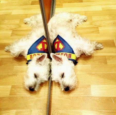 pooch in a superdog cape sleeping on the floor near a mirror
