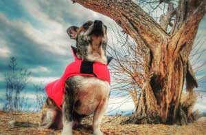 Funny Dog Image of Superdog looking up into the air near a tree for cool dogs.