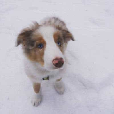 Navy Eyed canine in the snow