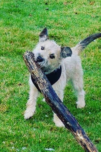 little pooch with big stick