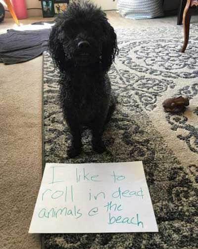 canine rolls around in dead animals