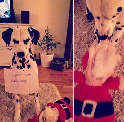 Dalmatian kills Santa