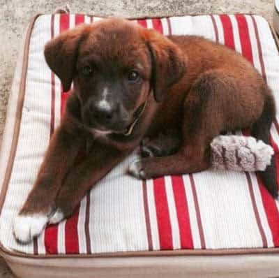 Puppy chilling on the cushion