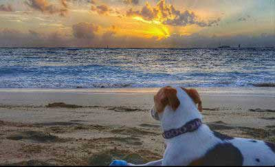 Dogs on the beach with a beagle checking out a sunset