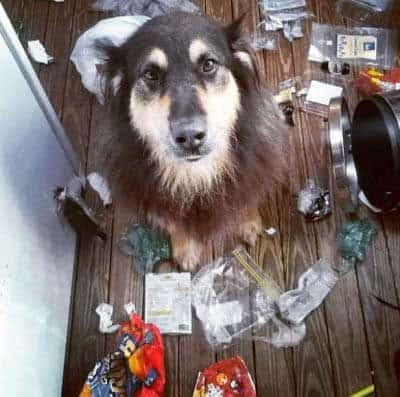 Hilarious dog pictures with a Canine who made a general mess