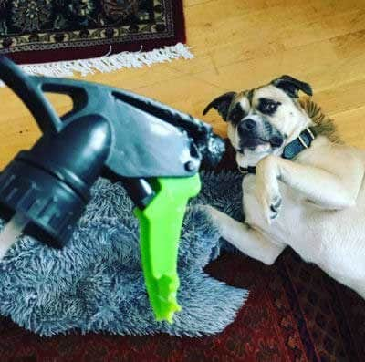 silly dog pictures with a canine who chewed up a spray bottle