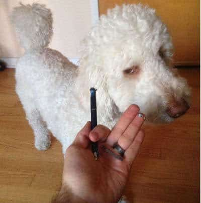 Hilarious dog pictures with a pooch got to pen and chewed it up