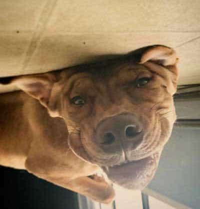 great upside down face pooch
