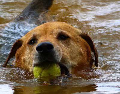 pooch bringing back a ball