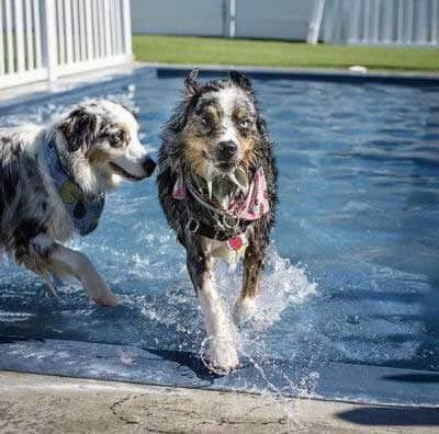 two dogs playing in a pool