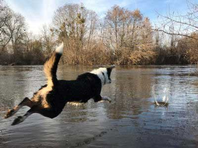 canine leaping into the lake