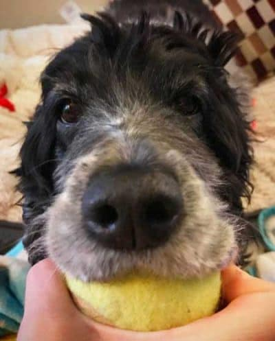 pooch won't give up a ball for Dogs and balls pictures