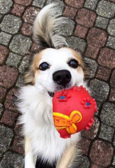 little pooch with a crushed ball for Dogs and balls pictures