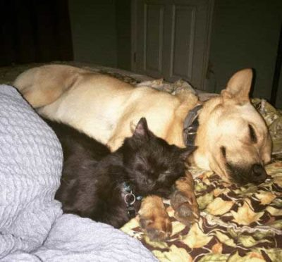 canine and cat sleeping