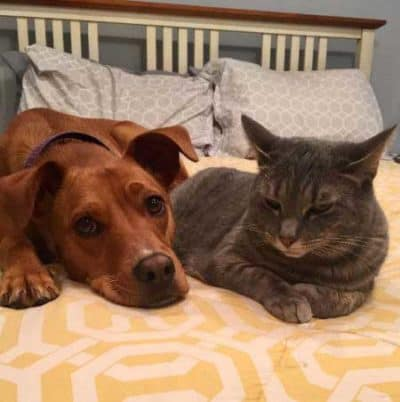 pooch and cat on the bed
