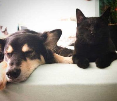pooch and cat slepping