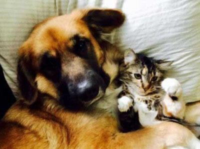Canine and kitten chilling out