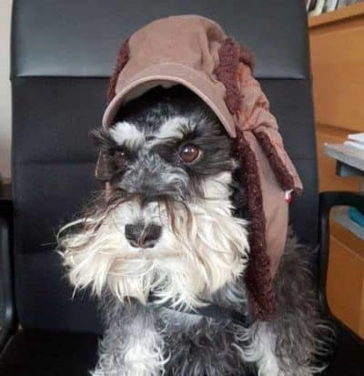 Schnauzer with a hat on that makes him look like a Jedi