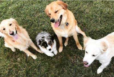 group of dogs laughing like a joke is being told