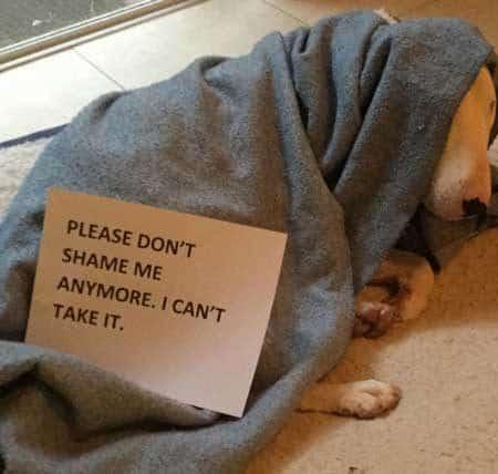 Dog Shame canine pleads not to be shamed again