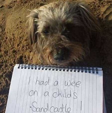 canine pees on a sandcastle
