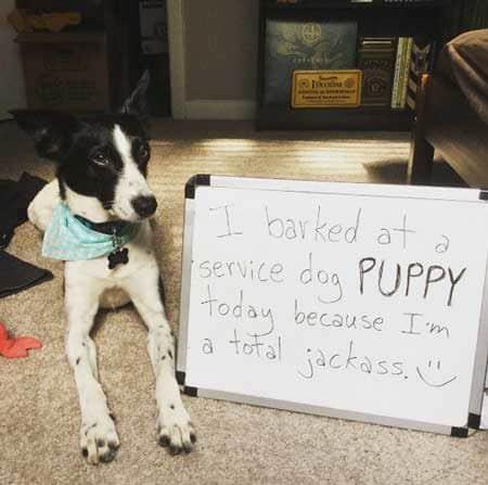Dog Shame canine is a bully