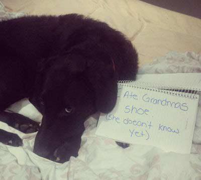 pooch getting shamed for eating a shoe