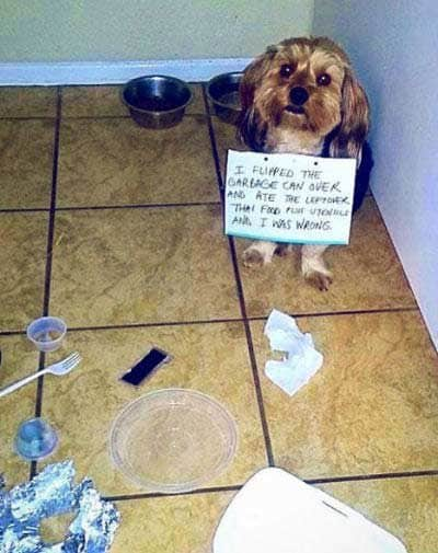 dog shame pictures of little pooch nailed the trash can