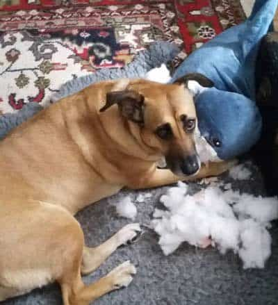silly dogs ate the stuffing out of a stuffed animal!