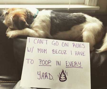 pictures of dog shaming with a pooch poops in every yard