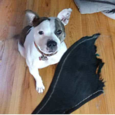 pooch destroys an insole
