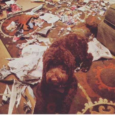 funny dogs of destruction with a canine destroys a room with shreds of paper