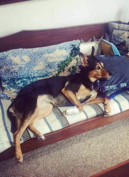 funny Dog Photos with a pooch chilling on the sofa