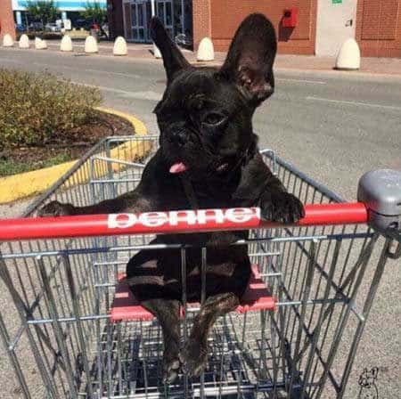 funny Dog Photos with a small canine in a shopping cart where little kids sit
