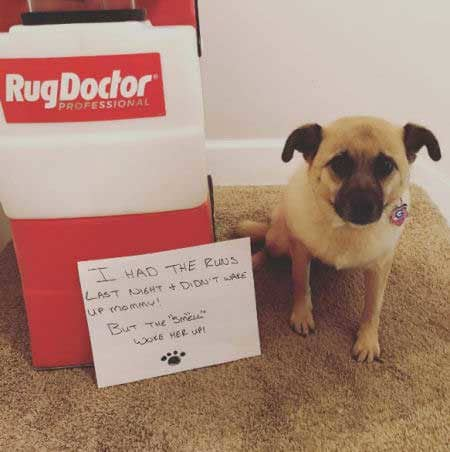 pooch shamed for carpet incident