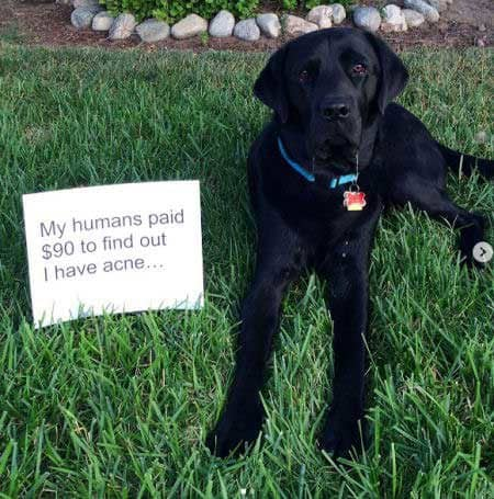 part one Labrador dog shaming pictures