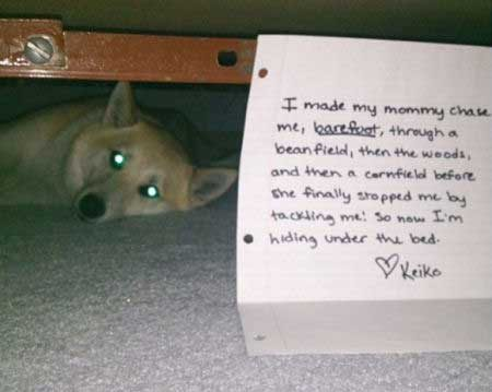 dogs in trouble with a pooch hiding under bed