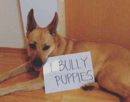 pooch admitting to bullying puppies