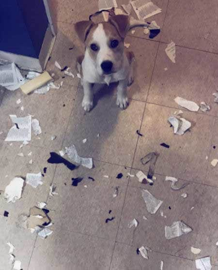 crazy dog pics of a puppy standing over shreds of the Bible he just ate