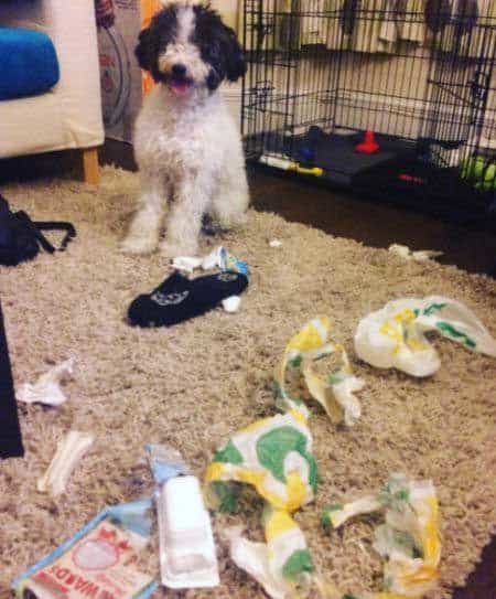 pooch leaves a mess on the rug
