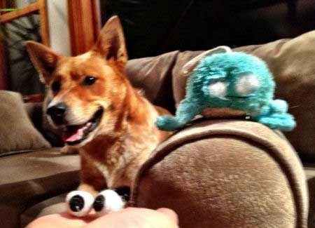 silly dog pics with a canine that eats the eyes off a stuffed animal