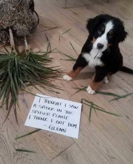 Puppy destroys a plant